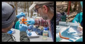 Health assessments of salamanders in the Great Smoky Mountains National Park, where ranavirus outbreaks have occurred; Matthew Gray shows a student how to use a spring scale (photo credit, Todd Amacker Conservation Photography)