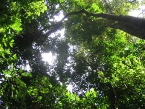 rainforest_NIMBioS