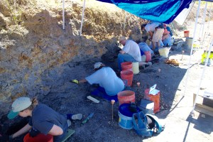 A typical dig, with a group of volunteers working on the fossil layer (dark layer) from summer 2015.