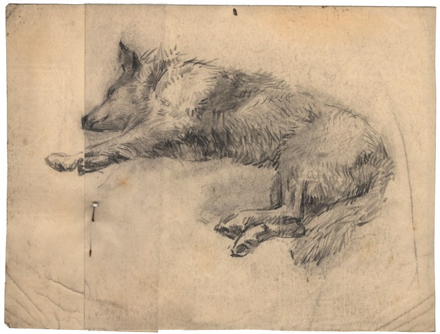 Pencil sketch of a dog. Anna Catherine Wiley Sketches, Special Collections, University of Tennessee Libraries.