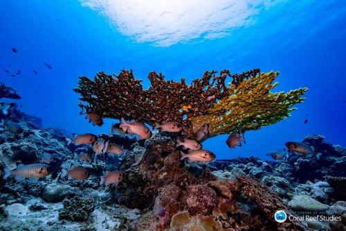 Coral-reef-2