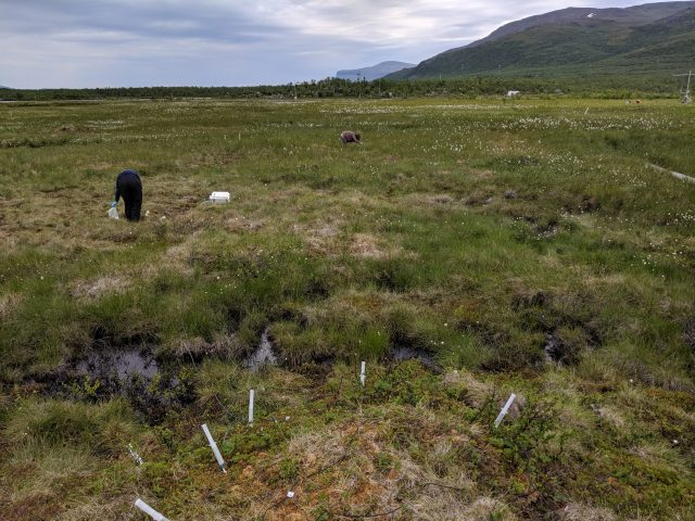 Elizabeth Herndon stands on a palsa, a patch of ground that has permafrost less than a meter below the soil surface. Using special instrumentation, Herndon collects soil water and measures oxygen in the pore space— the void space within soil that can be filled by water or air. In the foreground is a bog area where permafrost has completely thawed and caused the ground to collapse and pool with water.