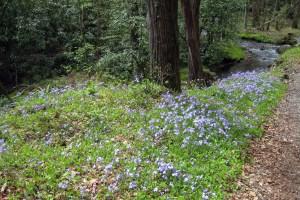 wildflowerfeature3-3