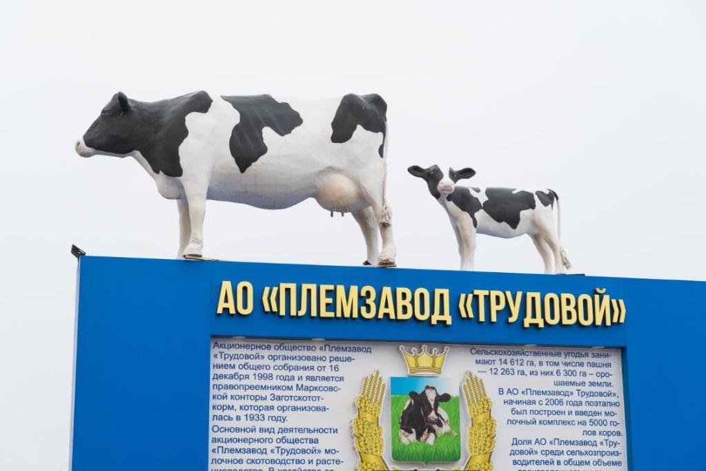 племзавод трудовой павловка марксовский район - смотреть репортаж россия 24