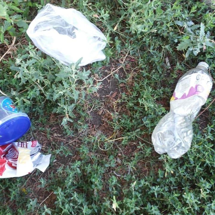 мусорят, убивают ежей - обращение к жителям розкинсокго мо