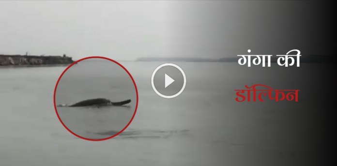 Ganges River Dolphins spotted in Meerut.