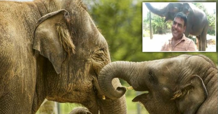 Bihar Man transfer Rs 5 crore property to Elephants