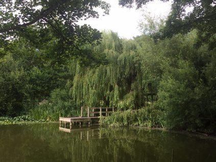 Acton Park 1