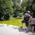 Αναβιώνει το ιστορικό καφενείο του Εθνικού Κήπου