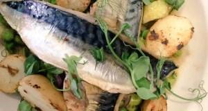Grilled mackerel