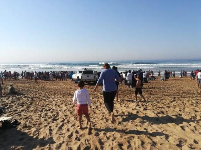 sardines arrive in Durban