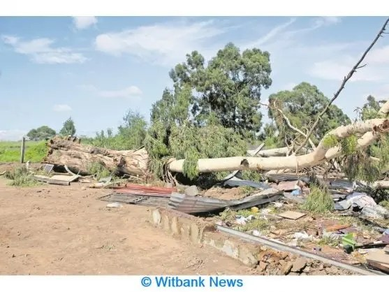 The huge tree that fell on the Selahle shack at Empumelelweni Marikana section on Monday night, January 13 at about 22:30