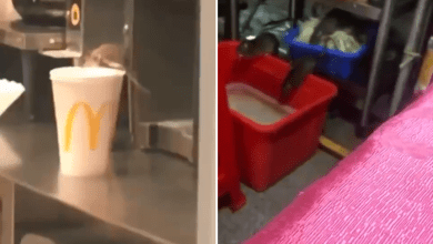 Photo of Video showing Rats inside a McDonald's kitchen causes chaos – Watch