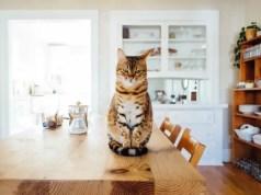 Keep Cat healthy