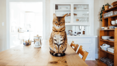 Photo of Keep Your Cat Healthy with These Cleaning Hacks