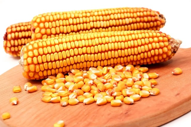 shortage of maize