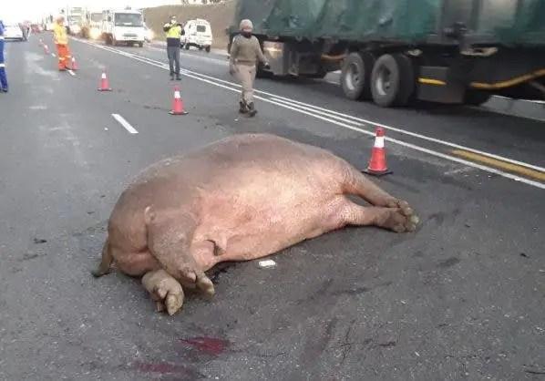 hippo dead