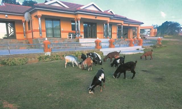 Babo Ngcobo house