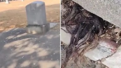 Man finds human hair coming out of the grave