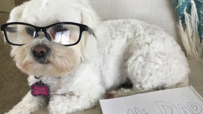 News 8 team shares favorite pandemic 'Pet Stories'