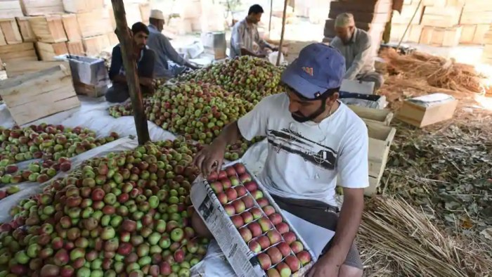 Uttarakhand to set up four Centres of Excellence to promote apples, spices