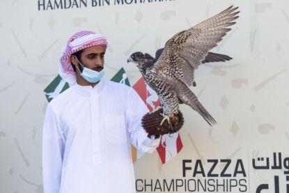 Hamdan's falcon posts a strong finish at Fazza Championships in Dubai