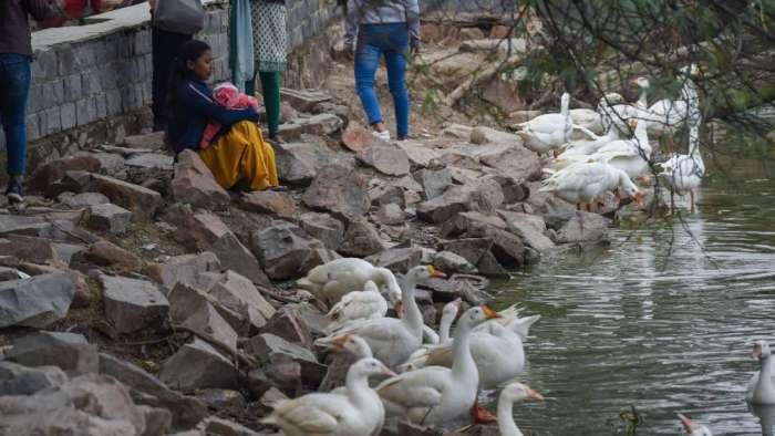 Sanjay lake, major parks closed in Delhi, check details