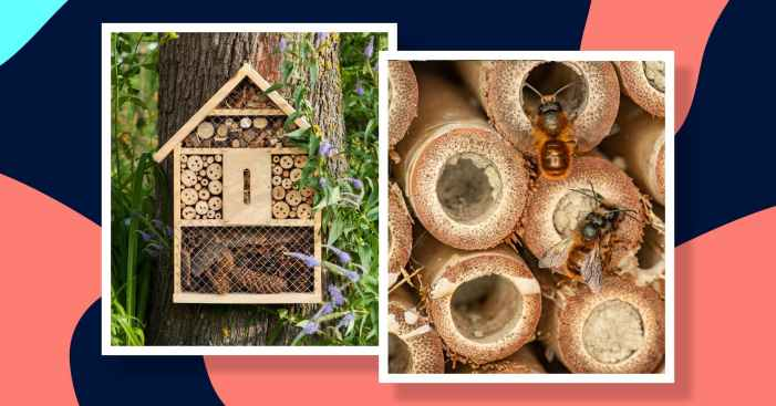 Craft a bee hotel in 7 easy steps to help protect the species