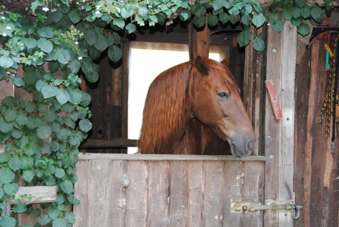 4-facts-that-everyone-needs-to-know-about-pet-horses