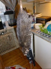 giant viking rat