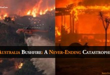 Photo of Australia Bushfire: A Never-Ending Catastrophe