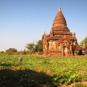 Templo e Plantações em Bagan