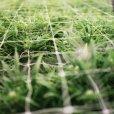 Canadian Cannabis Startup Closes $38 Million Capital Raise