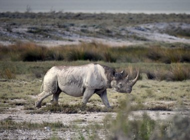 Namibia threatens Withdrawal from CITES