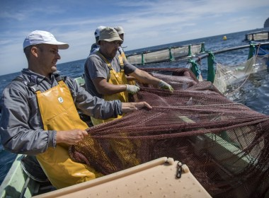 Floundering Moroccan fishermen turn to aquaculture for revenue