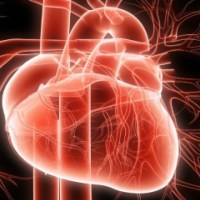 Cardiovascular Disease Related Death Rate Rises in India by 34%