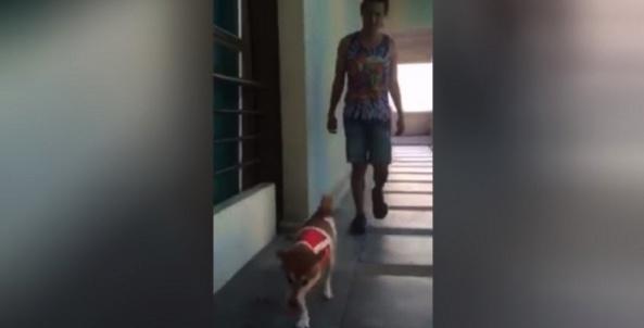 Three legged dog latest Thai Net sensation