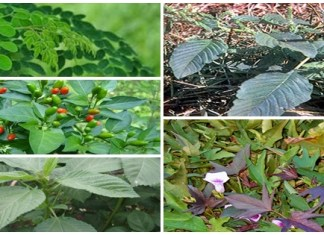 Top five herbal plants