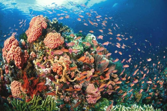 DENR Discovers 70 Hectares Of Undisturbed Coral Reefs In Guimaras