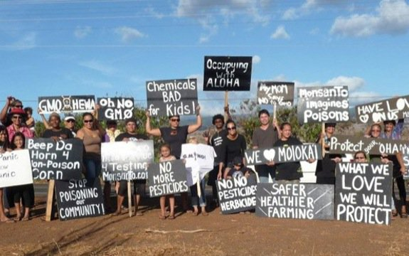 protesting against hawaii gmo