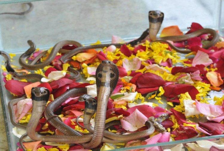 भारत के इन नाग मंदिरों में महज दर्शन से दूर हो जाता है कालसर्प दोष