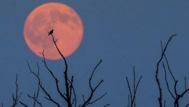 Eventos Astronômicos de Junho - Lua de Morango