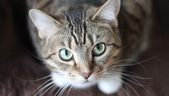 Gato, exemplo de forma de vida complexa - Existe Vida fora da Terra?