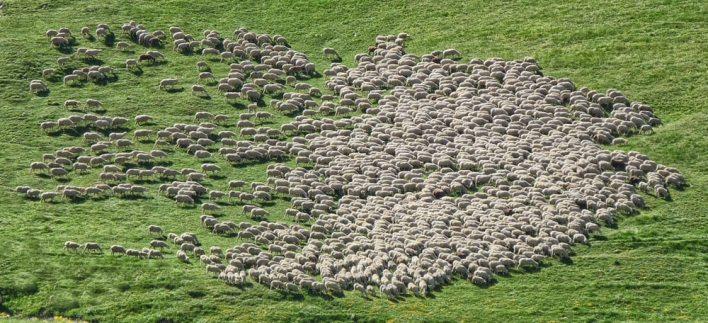 Maria Vai Com as Outras, Rebanho de Ovelhas