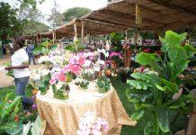 Excerpt from 2013 Ghana Garden and Flower Show.