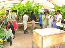 IITA Youth Agripreneurs in their banana multiplication unit recently.