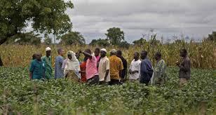 northern farmers