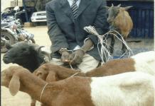 Kofi (in suit) standing behind the animals