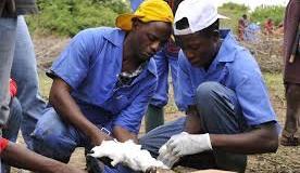 veterinary officers