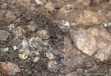 The 11th Century coins had been left in a ?sealed? lead container